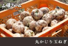 佐賀平野の肥沃な大地と有明海の潮風を受け、甘くてみずみずしい「丸かじり玉ねぎ」