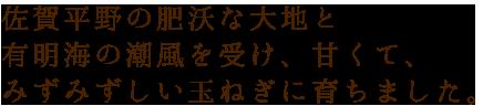 佐賀平野の肥沃な大地と有明海の潮風を受け、 甘くて、みずみずしい玉ねぎに育ちました。
