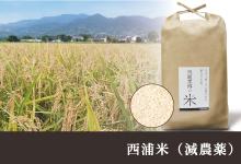 佐賀県特別栽培農産物認証、減農薬で育てた 「西浦米コシヒカリ・ひのひかり」