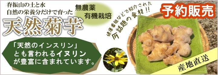 菊芋 無農薬・有機栽培 予約販売