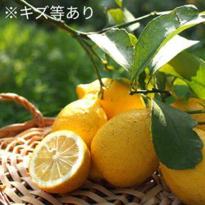 佐藤さん家の有機リスボンレモン(傷等あり)