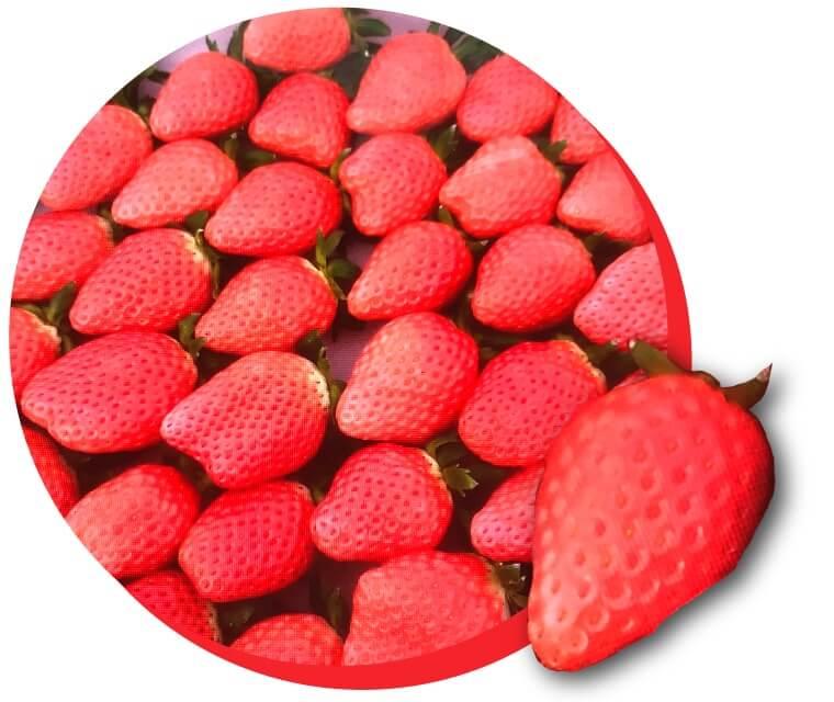 こはる イチゴ