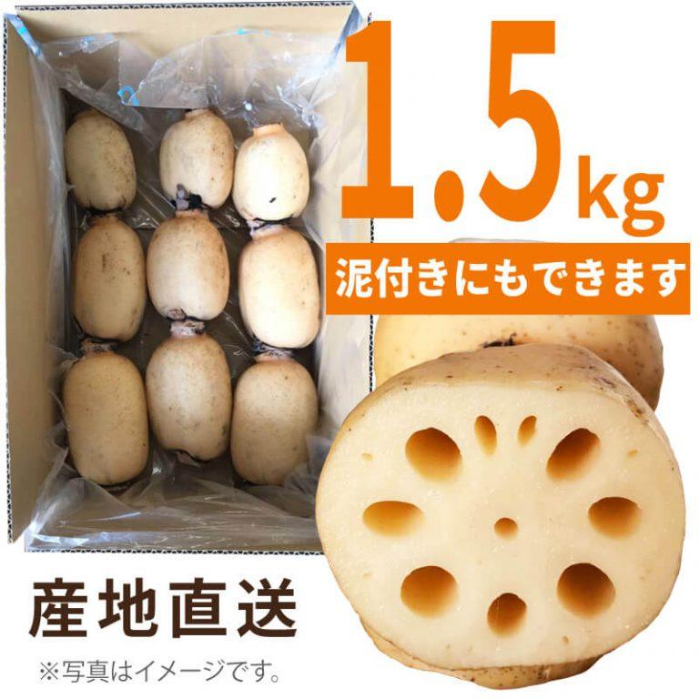 有機JAS認定福富レンコン 1.5kg